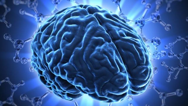 cerebro_joven